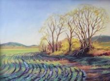 Winding Winter Fields